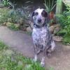 Preciosa the dog