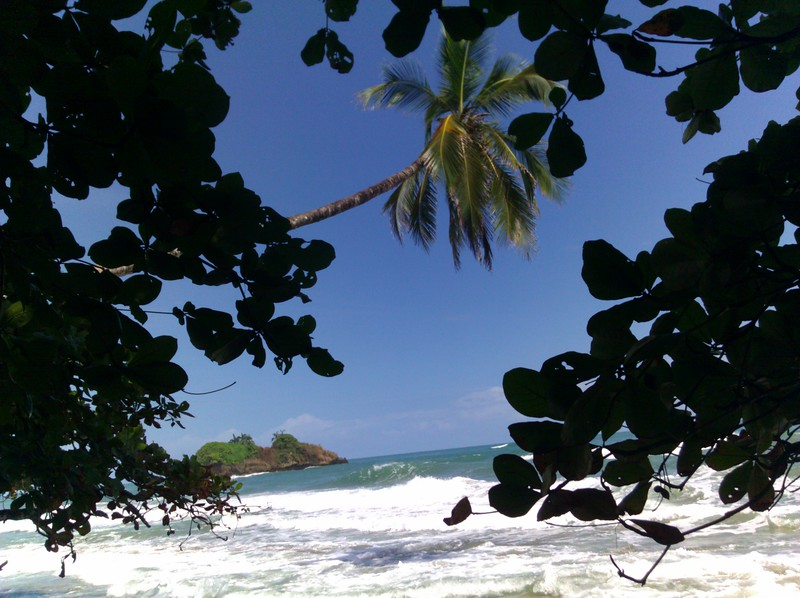 palm tree and view of the waves
