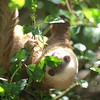 two toed sloth at the jaguar rescue center