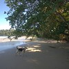 stray beach dog at Punta Uva beach