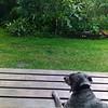 Preciosa the dog on our front porch