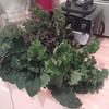 a plethora of kale (italian aka dinosaur   redbor   scarlet) grown at stattgarten