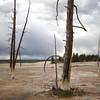 near the paint pots at yellowstone