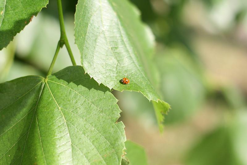 techno ladybug