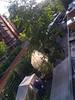 stattgarten from above