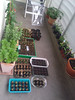balcony seed plantings