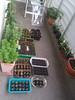 balcony seed plantings