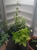 balcony corner planter