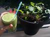today's shake is: baby kale (italian senza testa   siberian) from the balcony, banana, nectarine