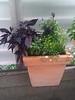 dark and purple planter on balcony