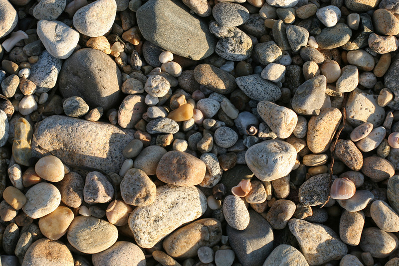 Rocks and Shells, Montauk Beach
