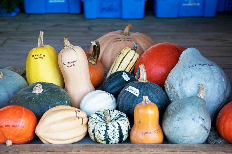 All Varieties of Squash, Balsam Farm