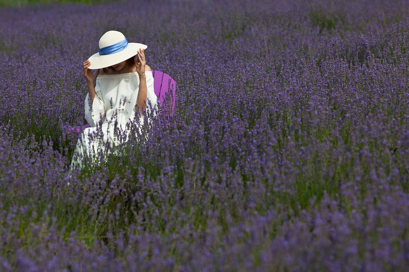 Lavender Field, East Marion