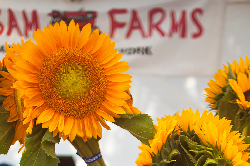 Sunflowers from Balsam Farms