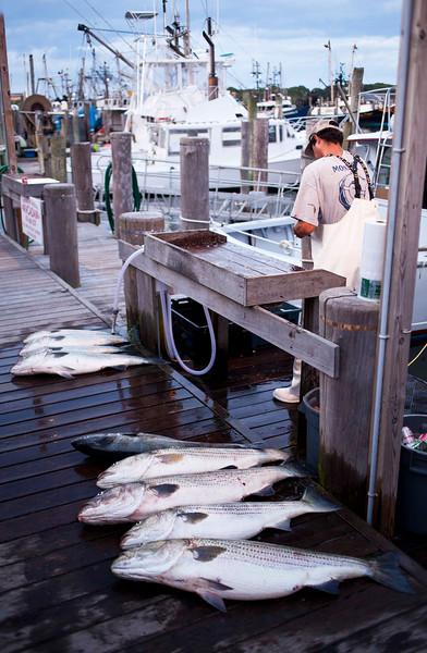Day's Catch, Montauk