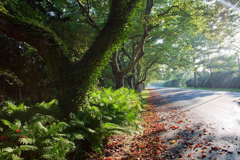 Lily Pond Lane 2