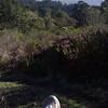 running the johnstone trail towards pebble