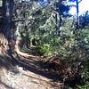 quiet forest trail