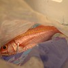 Ehu (Short Tail Red Snapper)