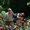 st roseline rose market