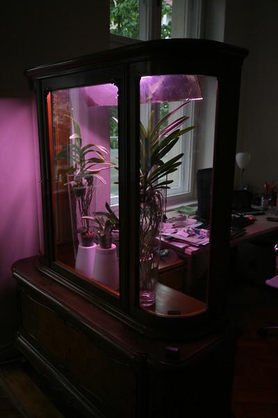 the orchidarium, rev 1