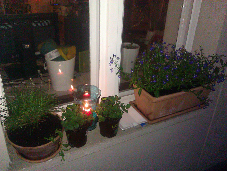 plants and candles on the balcony windowsill