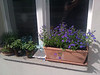 windowsill plants on balcony