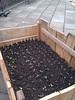 baby plants in planter at Stattgarten