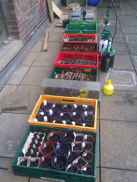 planting up seeds at Stattgarten, may 1st 2013