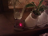 orchidarium's new sensor box