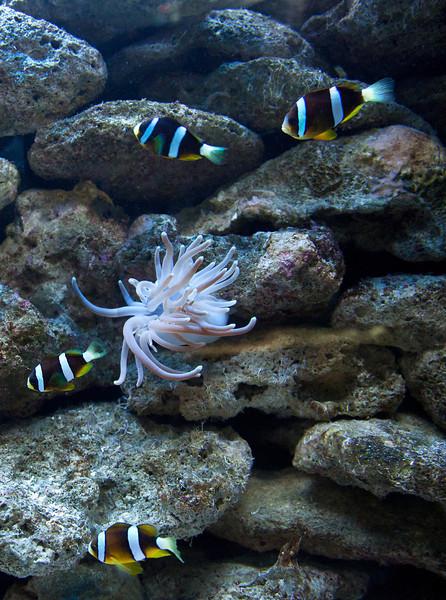 Underwater Cancun