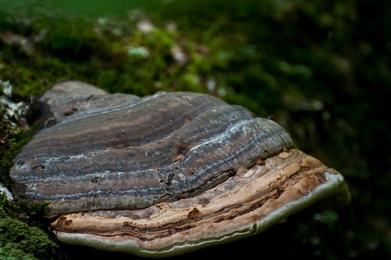 SnailShroom Ridge