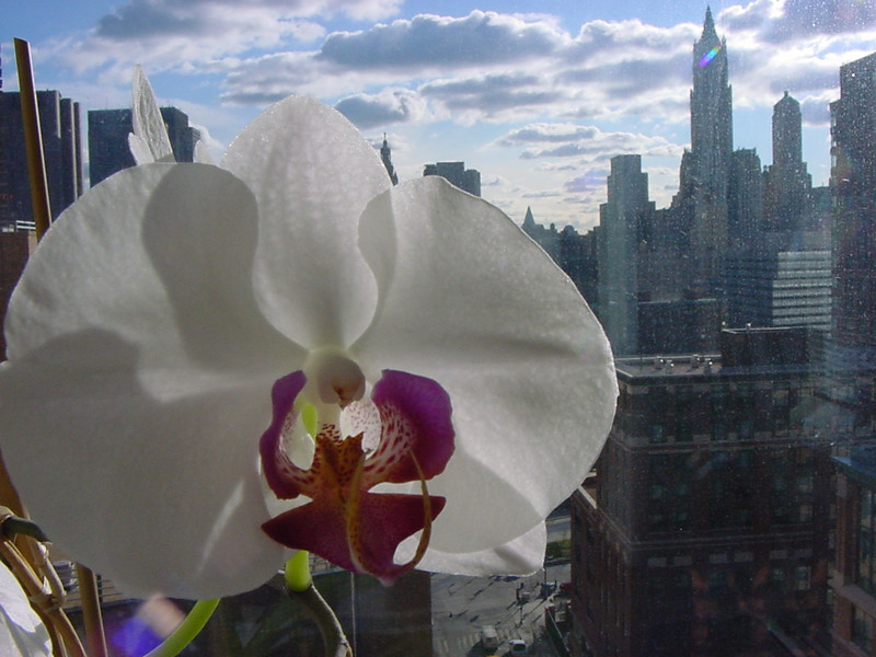 orchid city