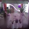 watering time in the orchidarium