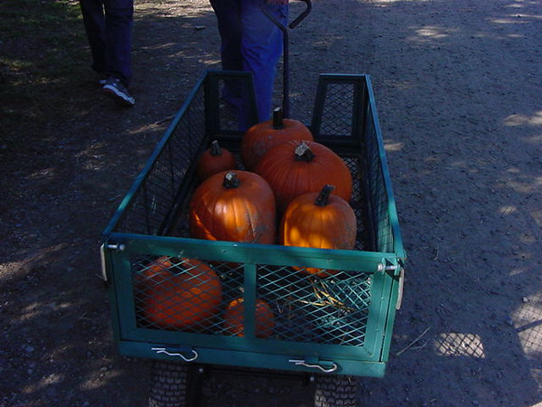 cartload o\' pumpkins