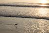 27 August 2015: sunrise on the beach, Atlantic Beach, near Jacksonville, Florida.