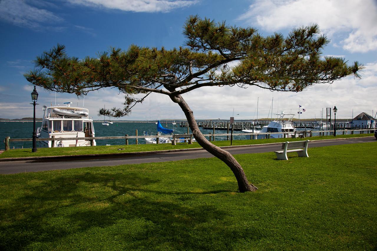 Umbrella Pine, Marine Park