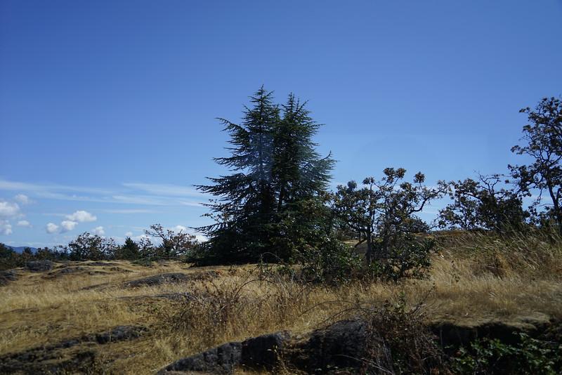 Mount Tolmie Park
