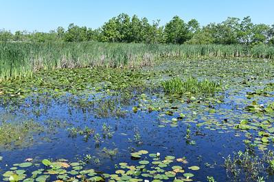 Creole Nature Trail, Lake Charles, Louisana