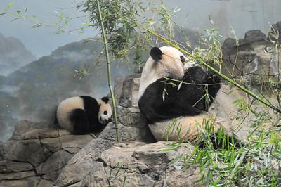 Mei Xiang and Bao Bao