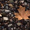 Leaf and Rocks, Mississippi River Shoreline