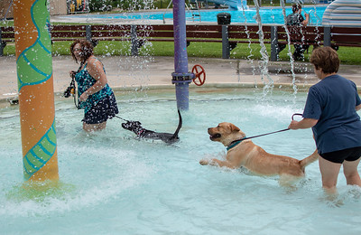 Doggie Pool Party