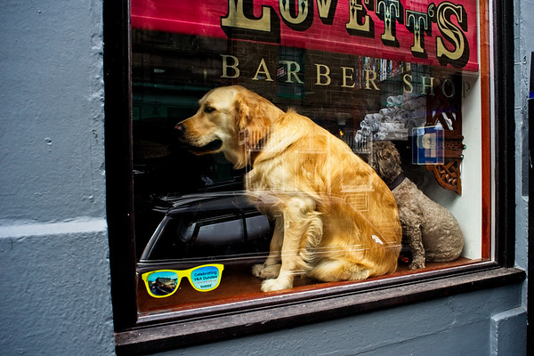 How Much is that Doggy in the Window...
