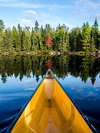 Lone Maple, Boundary Waters Canoe Area Wilderness