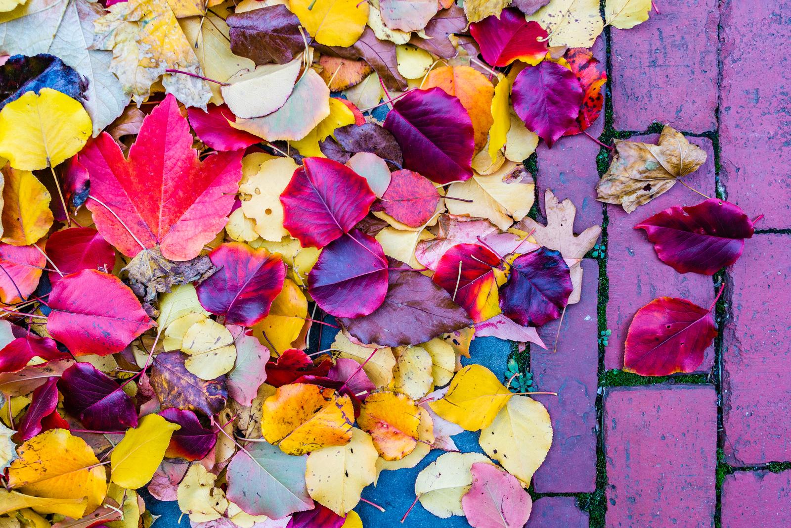 Fall Leaves on Brick