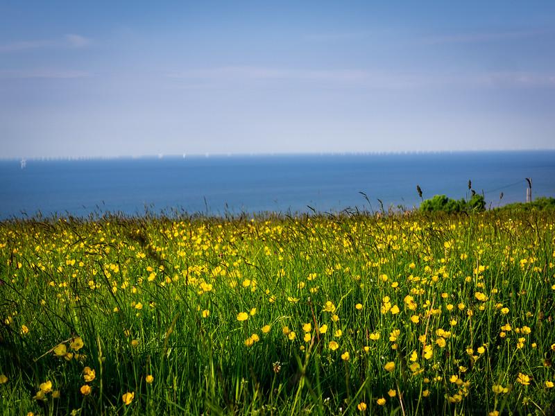 Buttercups, Sea, Sky