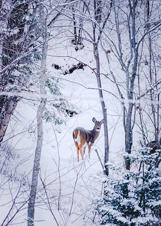 Winter apparition