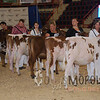 HarrisburgAyrshire15_DSC_0135