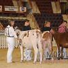 HarrisburgAyrshire15_DSC_0129