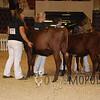 HarrisburgMilkingShorthorn15_DSC_0136